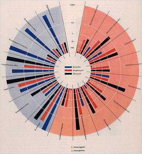 Will Burtin's Original Antibiotic Effectiveness Graphic