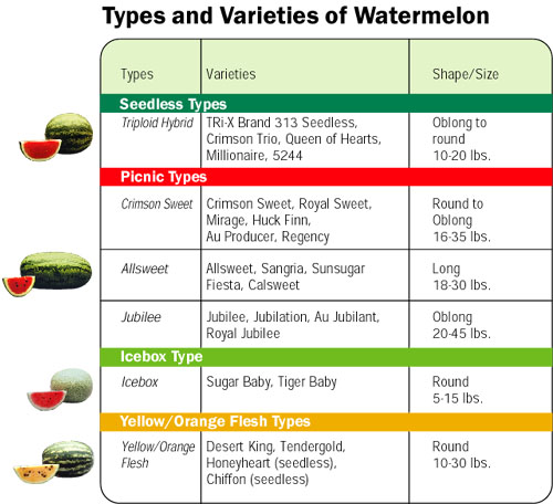 Types and Varieties of Watermelon